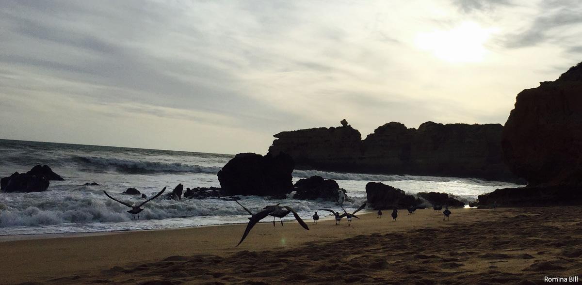 Reisefoto Algarve Natur